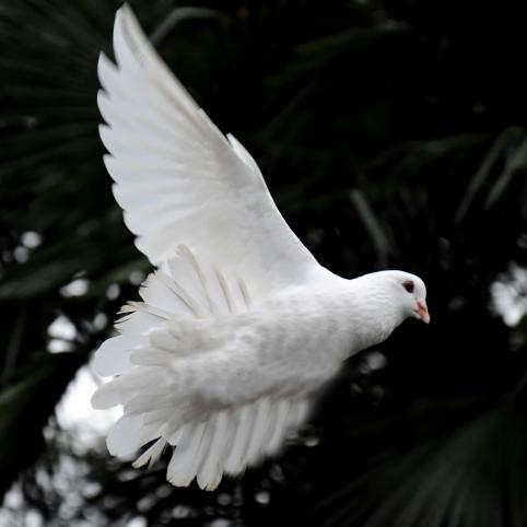 Fredssamtalen 2020 blir digitala