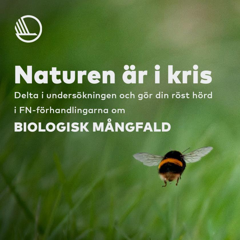 Survey among young people for biological diversity
